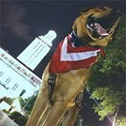 UT Votes Mascot, George Washington